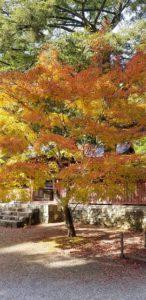 20181118 125002 146x300 - 紅葉真っ最中の京都、この連休が見頃です!お出かけのちょっとしたポイントをお伝えします♪