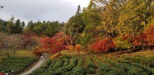 20181123 154649 300x146 - 大阪から行く滋賀の紅葉おすすめスポット。今年の見納めの紅葉は鶏足寺へ。