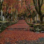 大阪から行く滋賀の紅葉おすすめスポット。今年の見納めの紅葉は鶏足寺へ。